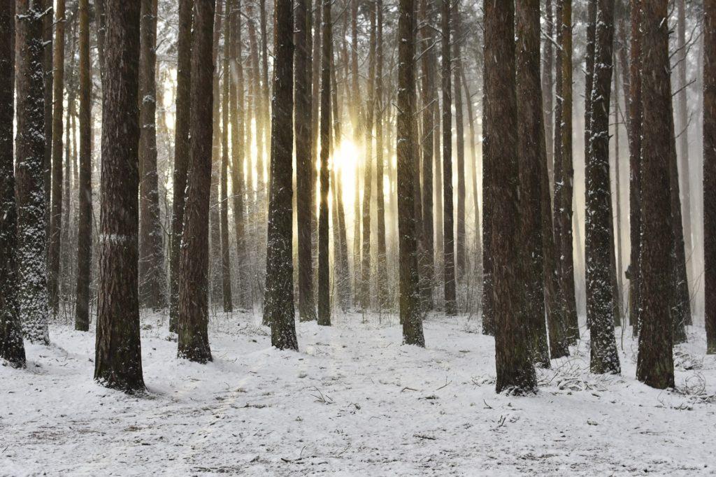 Magischer Winterwald