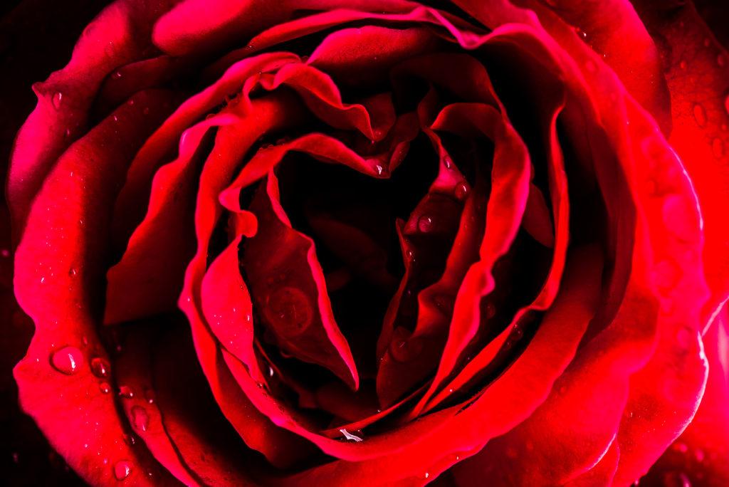 Die Rose als Symbol für die Yoni