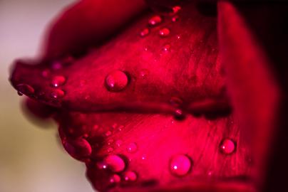 Sinnliche Blüte